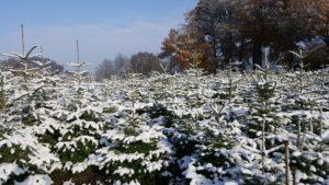 weihnachtsbäume mit Schnee