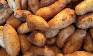 Frühkartoffeln